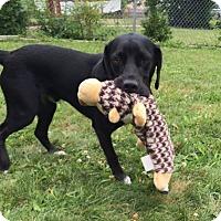Adopt A Pet :: Blaze - Alexandria, VA