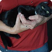 Adopt A Pet :: Niko - Surrey, BC