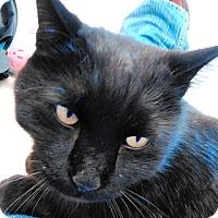 Adopt A Pet :: Fonzarelli - Cloquet, MN