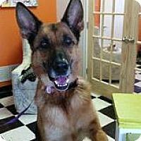 Adopt A Pet :: Helda - Kansas City, MO