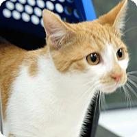 Adopt A Pet :: Mia - Durham, NC
