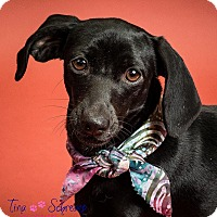 Adopt A Pet :: Tessa - Big Canoe, GA