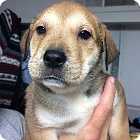 Adopt A Pet :: Finlay - St. Louis, MO