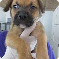 Adopt A Pet :: Leeloo - Murphysboro, IL
