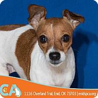 Adopt A Pet :: Impala - Enid, OK