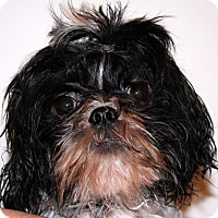 Adopt A Pet :: Harry - Torrance, CA