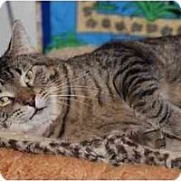 Adopt A Pet :: Zabu - New Port Richey, FL