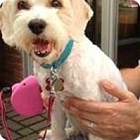 Adopt A Pet :: Rosie - Hilliard, OH
