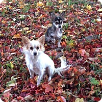 Adopt A Pet :: JJ and Archie - Bardonia, NY