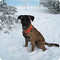 Adopt A Pet :: Miller - Monteregie, QC