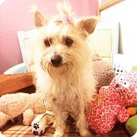 Adopt A Pet :: Britt - San Diego, CA
