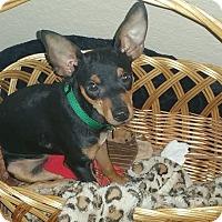 Adopt A Pet :: Jaxson - Sacramento, CA