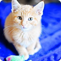 Adopt A Pet :: Odie - Xenia, OH