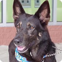 Adopt A Pet :: Sonya - Greensboro, NC