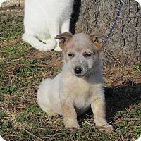 Adopt A Pet :: DROVER - Hartford, CT