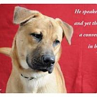 Adopt A Pet :: Joe - Savannah, GA