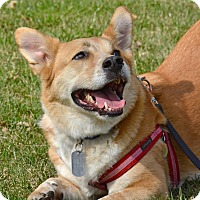 Adopt A Pet :: Kevin Tibbles - Jersey City, NJ