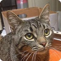Adopt A Pet :: Jonah - Winchester, CA