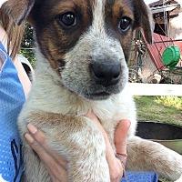 Adopt A Pet :: Sammie - Barnegat, NJ