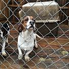 Adopt A Pet :: Wubsey