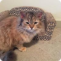 Adopt A Pet :: Ashley - Plainville, MA