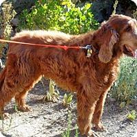 Adopt A Pet :: Jj - Incline Village, NV