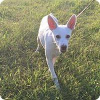 Adopt A Pet :: Mash - Dayton, OH