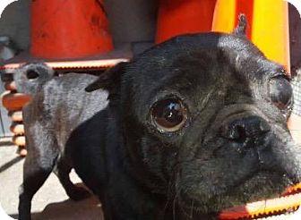 Pug Dog for adoption in Gardena, California - Tina