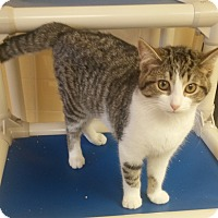 Adopt A Pet :: Sleepy - Tiffin, OH