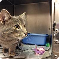 Adopt A Pet :: Sanders - Janesville, WI