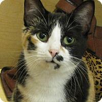 Adopt A Pet :: Jimilee - Tulsa, OK
