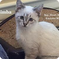 Adopt A Pet :: Simba - Temecula, CA