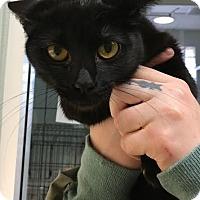 Adopt A Pet :: Pepper - Westminster, CA