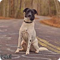 Adopt A Pet :: Daisy Bell - Shamokin, PA