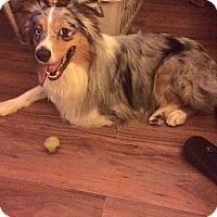 Adopt A Pet :: Apache - Monroe, NC