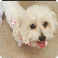 Adopt A Pet :: KJ - Canoga Park, CA