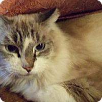 Adopt A Pet :: Locket - Ennis, TX