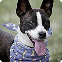 Adopt A Pet :: Alvin - Flowery Branch, GA