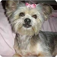 Adopt A Pet :: DeeDee - Mooy, AL