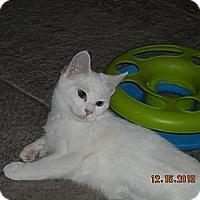 Adopt A Pet :: Celeste - Riverside, RI