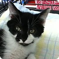 Adopt A Pet :: Andre - Riverside, RI