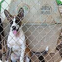 Adopt A Pet :: AC - Linden, TN