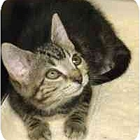 Adopt A Pet :: Waltz - Lombard, IL