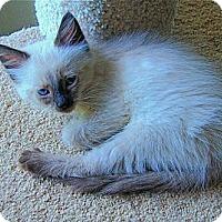 Adopt A Pet :: Maxie - Victor, NY