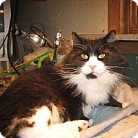 Adopt A Pet :: Jeff - Portland, ME