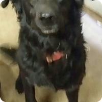 Adopt A Pet :: Sadie needs foster or home - Sacramento, CA