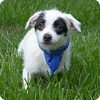 Adopt A Pet :: Bluenote - Mocksville, NC