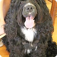 Adopt A Pet :: Booger - Homewood, AL