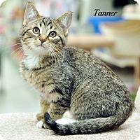 Adopt A Pet :: Tanner - Ortonville, MI
