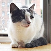 Adopt A Pet :: Sweet and bright Sunny - Brooklyn, NY